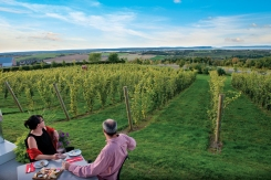 Luckett'sVinyard_newsky(hires).tif